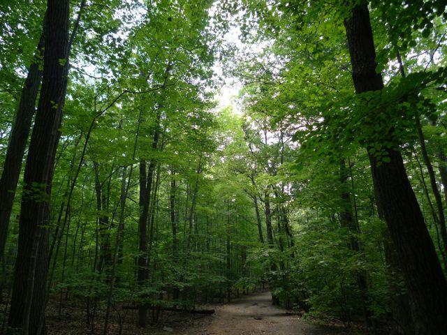 Mills Reservation & Lenape Trail